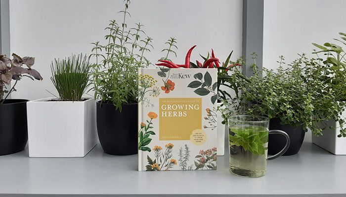 Growing Herbs by Holly Farrell